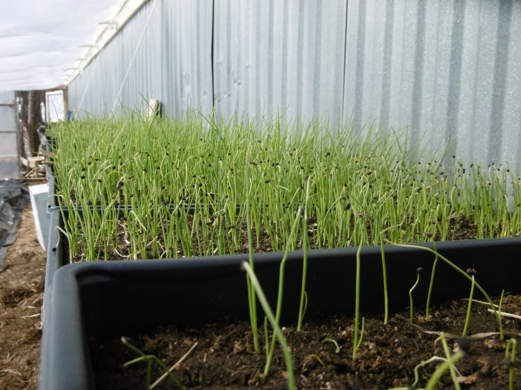 ignore the awful germination in the foreground